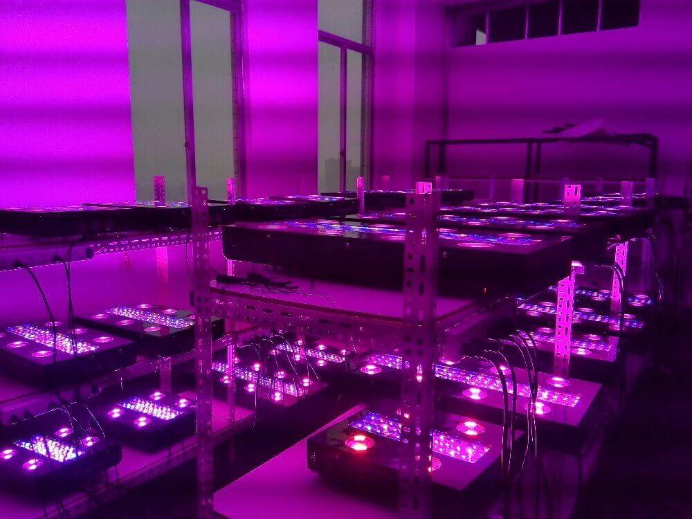 serial test at Technology Hydro Culture china led croissance floraison pour plantes fruits legumes